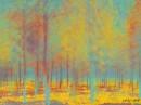 יער של צבעים