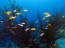 דגים בכתום