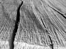 בול עץ