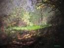 בסבך היער