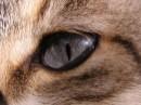 כחול בעיניים