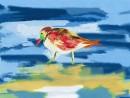מנוחת הציפור