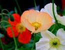אווירה אביבית