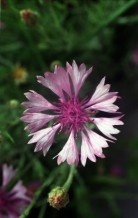 תמונה של פרח 2 | תמונות