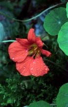 תמונה של פרח 4 | תמונות