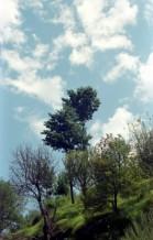 תמונה של עץ אל מול שמיים | תמונות