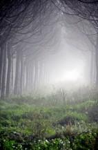 תמונה של היער הקסום | תמונות