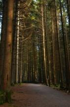 תמונה של ביער | תמונות