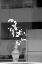 תמונה של אגרטל פרחים | תמונות