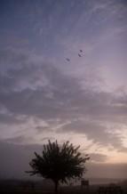 תמונה של שלוש ציפורים   תמונות