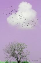 תמונה של עץ ירוק ביום ורוד  | תמונות