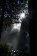 תמונה של אור ומים ביער | תמונות