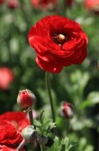 תמונה של אביב אדום 4 | תמונות