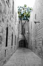 תמונה של עץ | תמונות