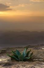 תמונה של זריחה במצפה רמון | תמונות