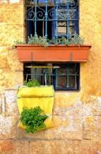 תמונה של פטרוזיליה בחלון | תמונות