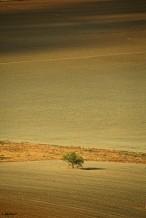 תמונה של העץ הנדיב | תמונות