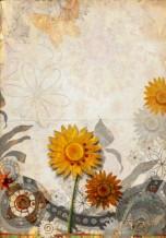 תמונה של פרח חמניה זהוב | תמונות