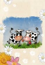 תמונה של פרות מאוהבות | תמונות