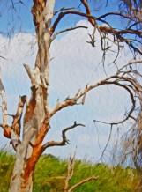 תמונה של שארית העץ | תמונות