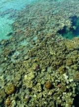 תמונה של אלמוגים אבסטרקט | תמונות