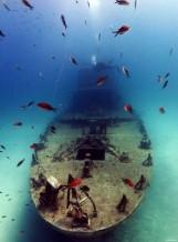 תמונה של ספינה צוללן דגים    תמונות