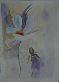 הפרח בלבן
