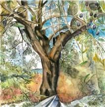 תמונה של עץ זית עתיק | תמונות