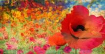 תמונה של פרחים | תמונות
