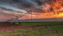 תמונה של חקלאות ישראלית   תמונות