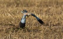 תמונה של מעוף הכחל | תמונות