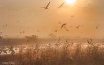 תמונה של עגורים בזריחה | תמונות