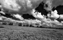 תמונה של שדות חיטה לנצח | תמונות