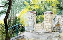 תמונה של גינה בירושלים   תמונות