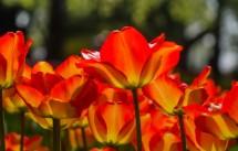 תמונה של אורות אדומים | תמונות