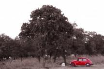 תמונה של החיפושית האדומה | תמונות