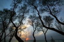 תמונה של שקיעה בין העצים   תמונות