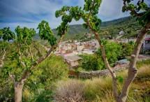 תמונה של מבעד לעצים | תמונות