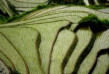 תמונה של טרסות אורז סין | תמונות