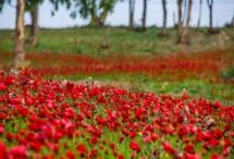 תמונה של מרבד אדום   תמונות