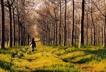 תמונה של יער | תמונות