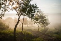 תמונה של זיתים בערפל | תמונות