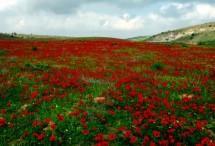 תמונה של שטיח אדום | תמונות