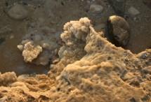 תמונה של מלח | תמונות