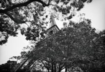 תמונה של Behind The Trees   תמונות