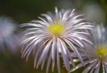 תמונה של Flowers in park | תמונות
