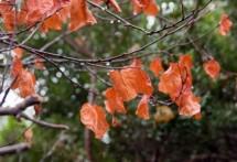 תמונה של העלים האחרונים | תמונות