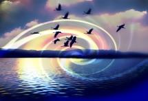 תמונה של עגורים על המים  | תמונות