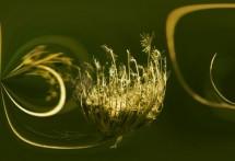תמונה של פרח בר מיוחד | תמונות