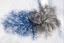 תמונה של עץ השדה | תמונות